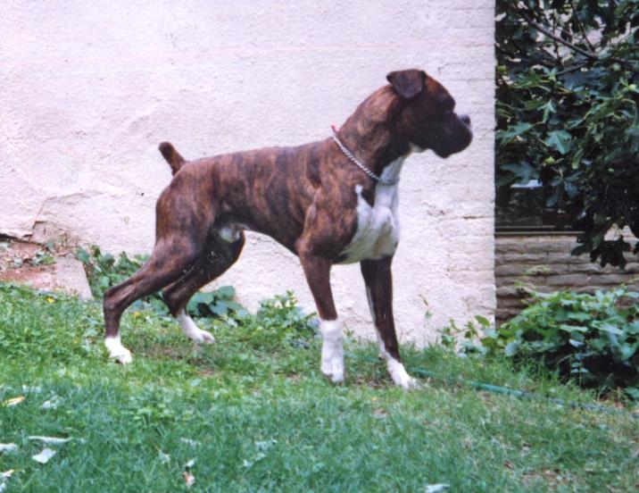 Tyson3