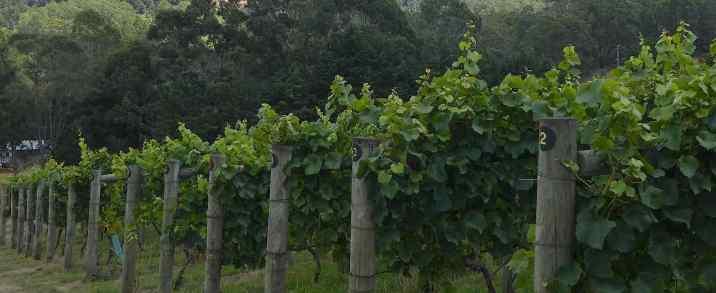 2.vineyard